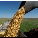 AGRO: Ola de calor podría provocar pérdidas en maíz