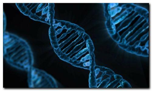SALUD: Descubren los genes que alargan la vida