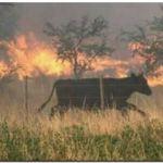 CARBAP preocupada por los incendios