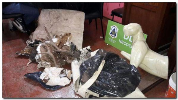 POLICIALES: Investigan por caza furtiva a tres hombres en Necochea