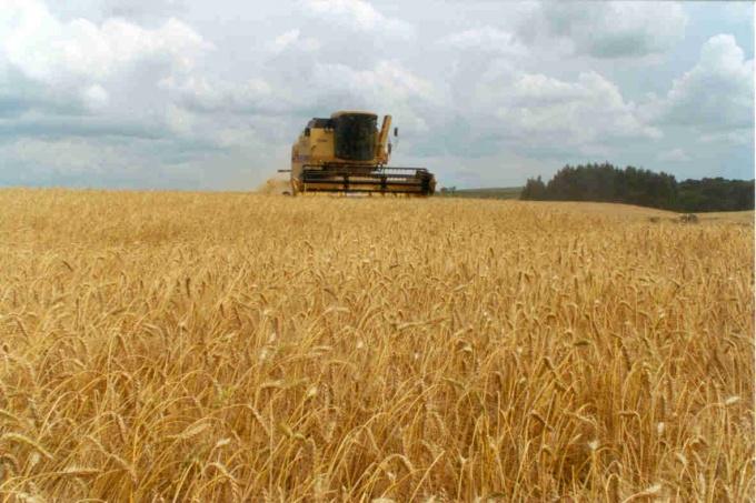 AGRO: Terminó la cosecha de trigo y es récord: 17 millones de toneladas