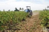 La sequía afecta a los productores agropecuarios de Enriquillo
