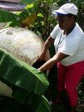 Hospital Calventi involucra a comunitarios en combate al dengue