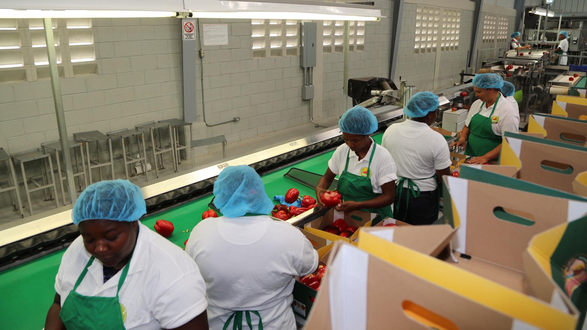 Medina visita empacadora en Ocoa; destaca empuje en producción vegetales