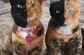Empresa hace copias exactas de tu mascota en versión peluche