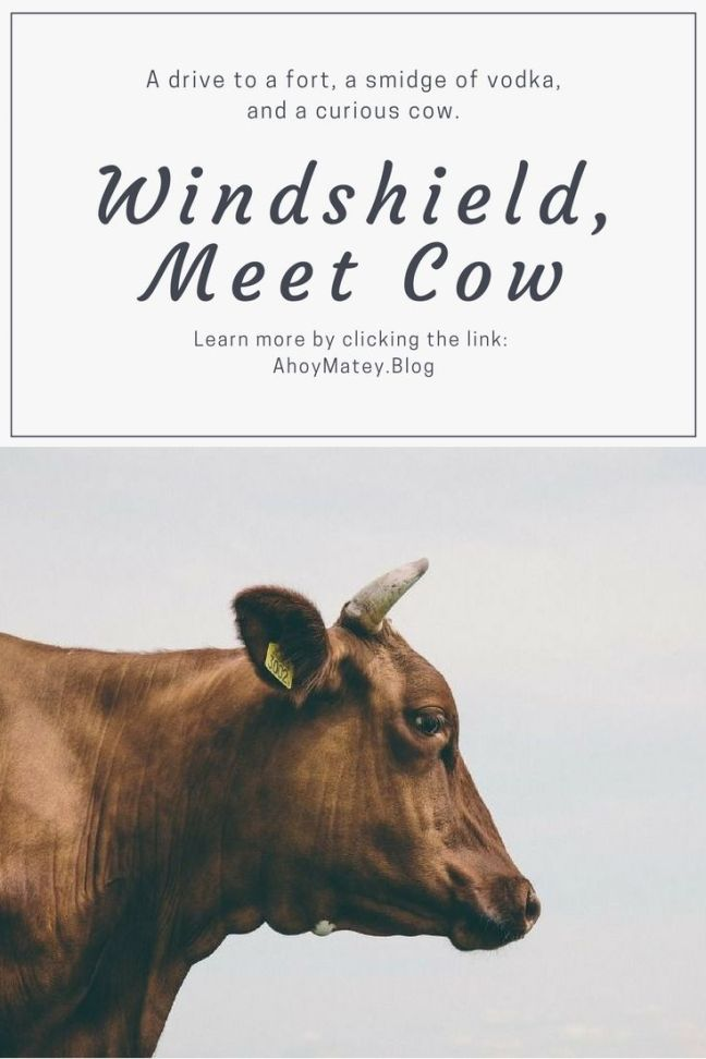 This funny travel story is about an incident that occurred while on a trip in Goa and involves a drive to a fort, a smidge of vodka, and a curious cow. #travel #humor #humour #funny