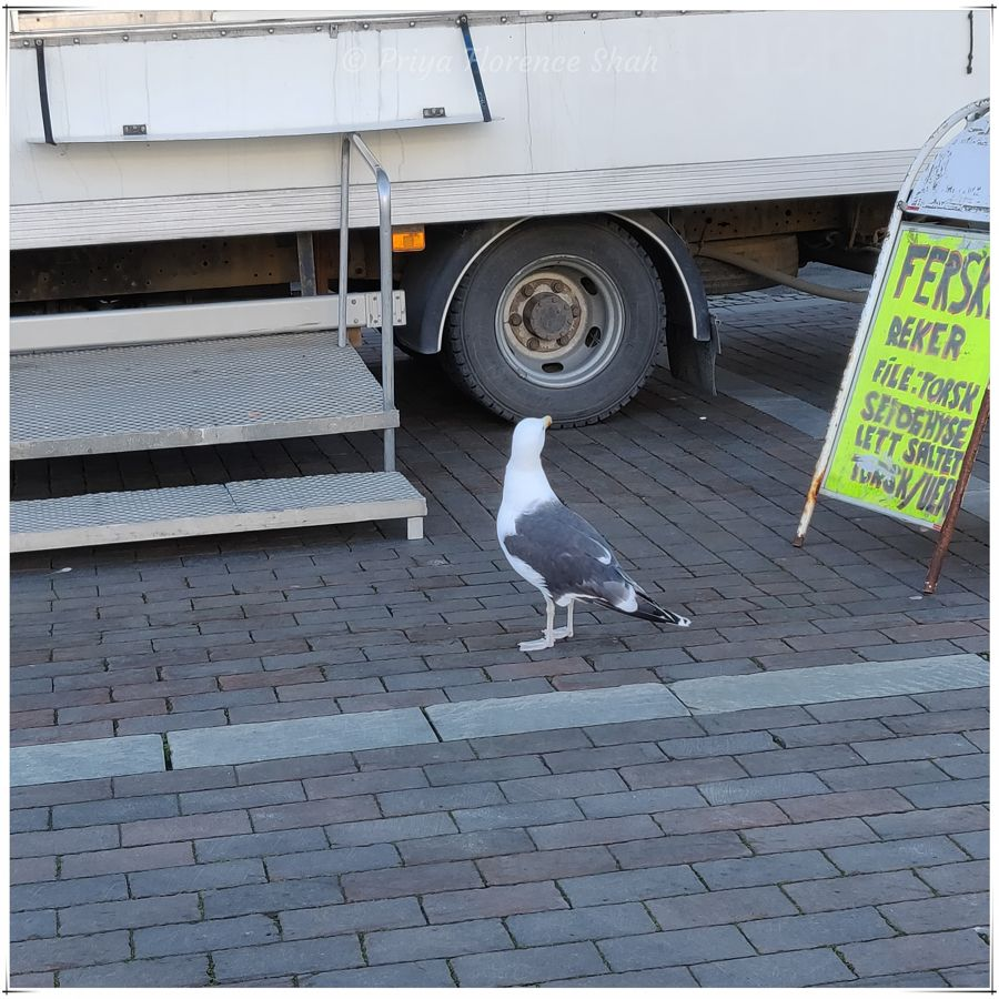 A hungry seagull inspects the menu at a food truck in the square