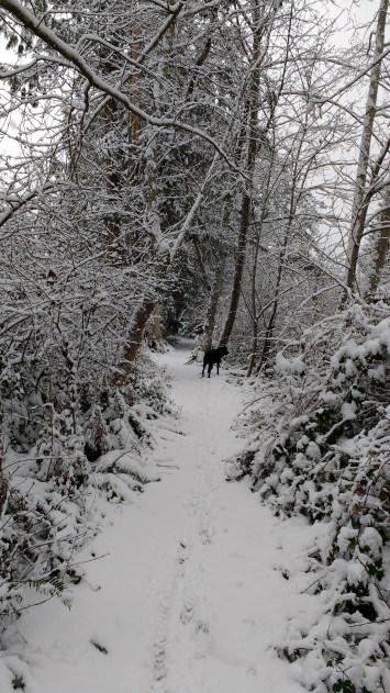 Libby dog on a snowy trail.