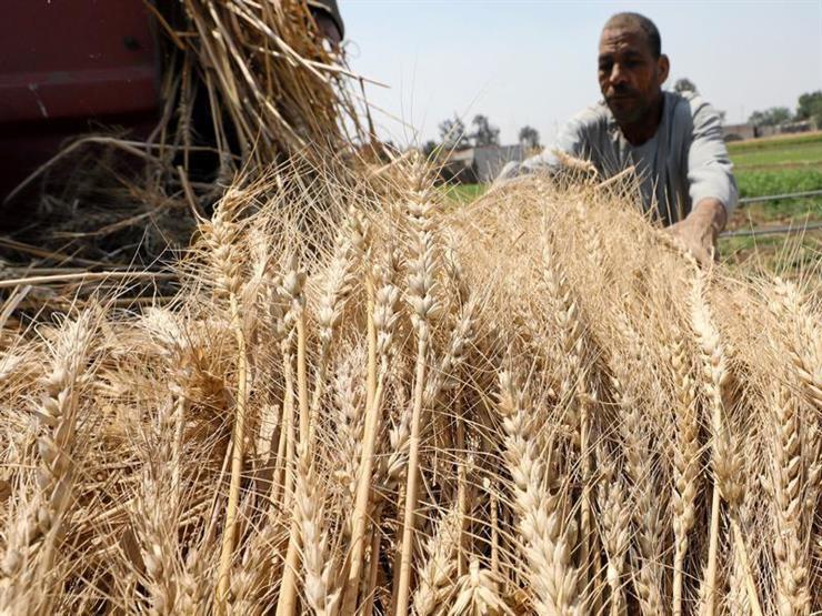 وزير التموين يُعلن سعر توريد إردب القمح لهذا العام 2019