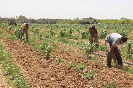 إتاوات وتعديات عرب الصحراء تمنع زراعة اراضي الـ 1.5 مليون فدان بالمنيا