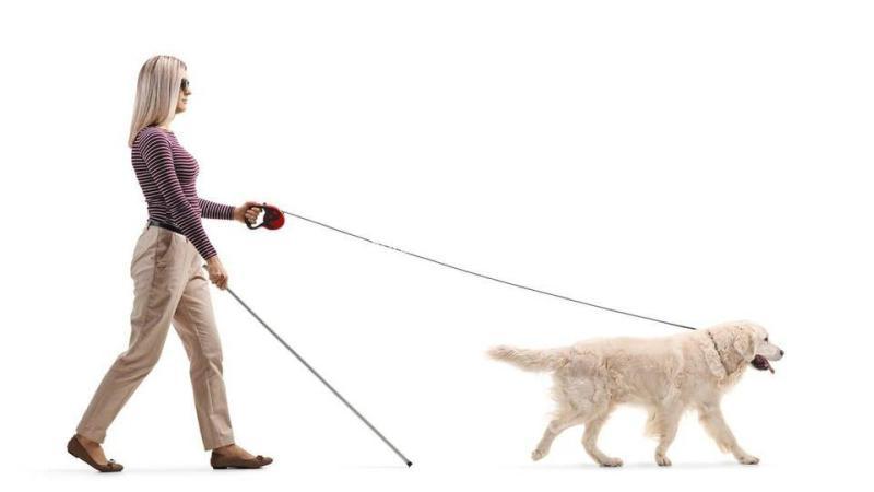 كلب يورّط أوبر بمبلغ خيالي ماذا حصل مع كفيفة