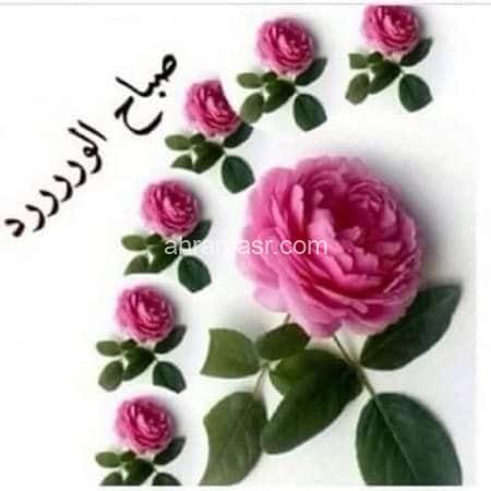 صباحيات..بدرى ابوخزيم
