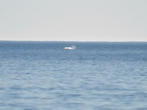 Salpicón de delfín saltando