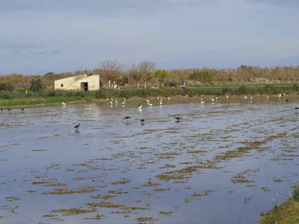 Campo regado en Los Carrizales (J. Marco)