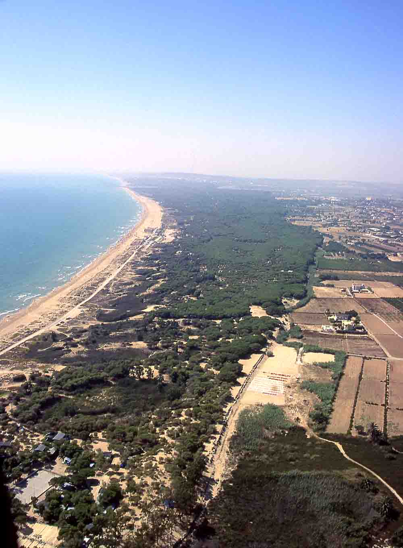 Vista aérea de las dunas de La Marina (L. Fidel)