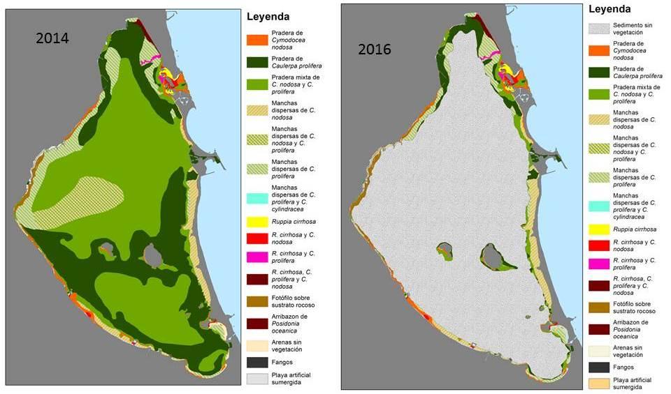 Cartografía con la distribución de las diferentes especies de fanerogamas marinas (ANSE)