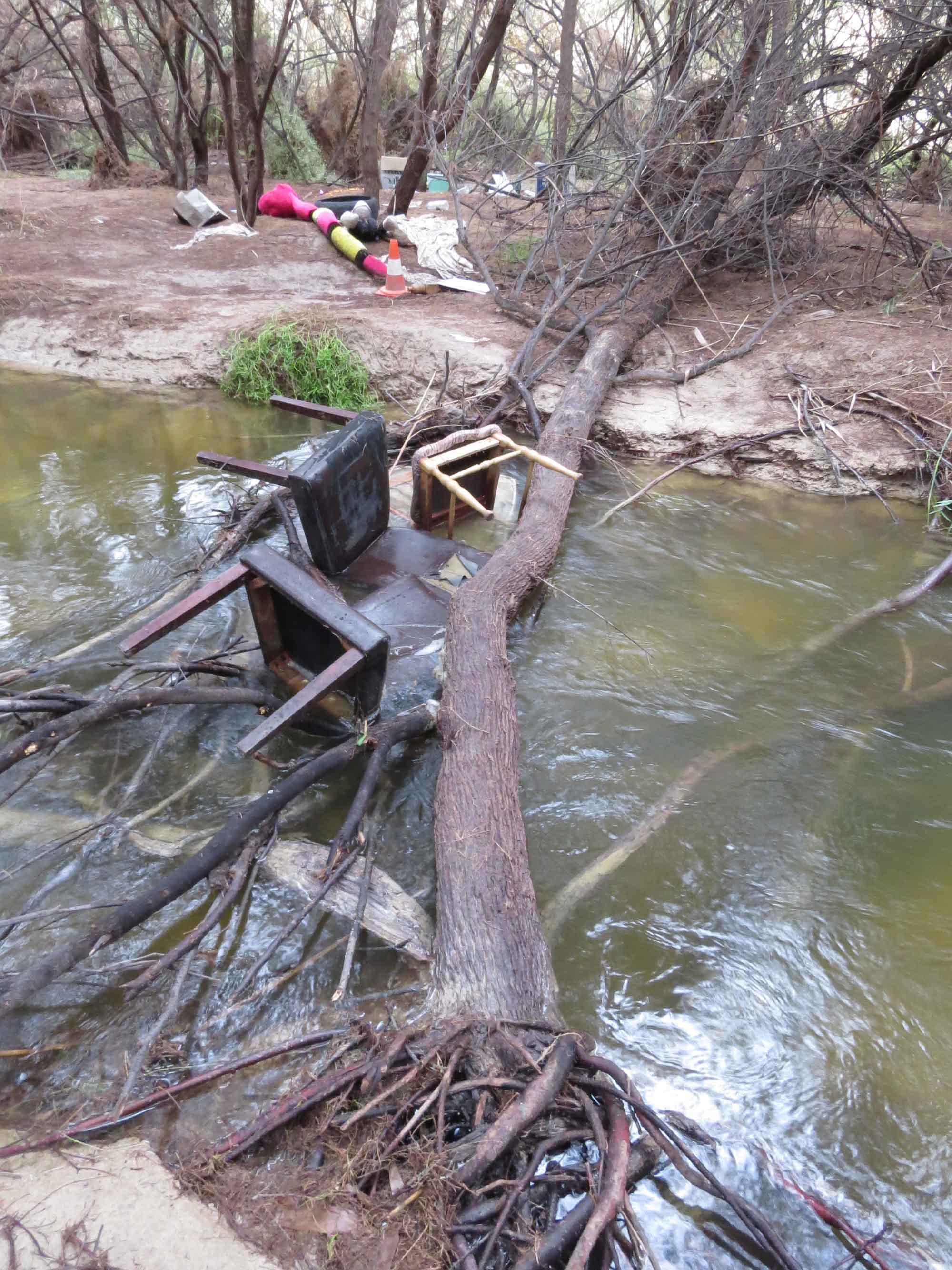 Basuras y un taray de gran tamaño derribado en el cauce del río