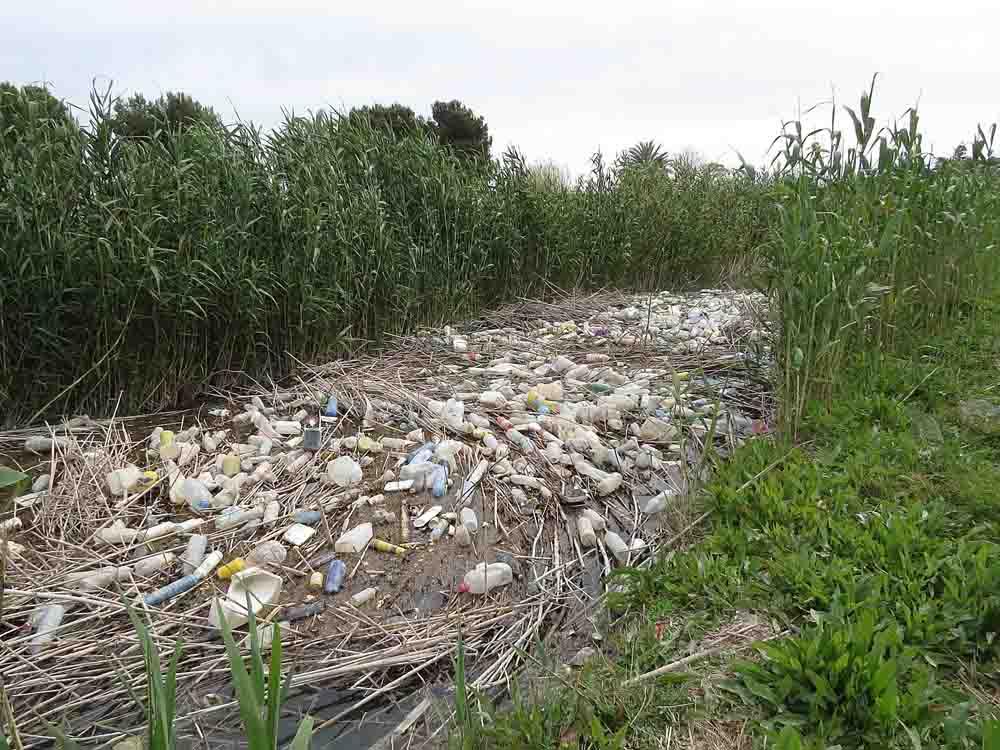 Cauce principal del río Segura a su paso por Rojales este otoño. Todos estos residuos están actualmente en el mar (S. Arroyo)
