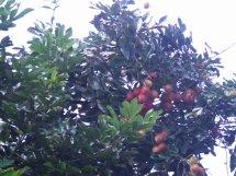 Gambar Mewarnai Pohon Beringin Anak Mosikcat Vtwctr