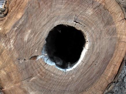 Wood G