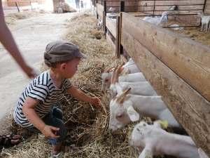 les petits de la micro creche en sortie à la ferme des fillaos