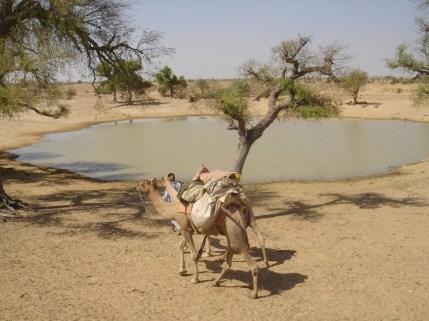 un oasis dans le désert