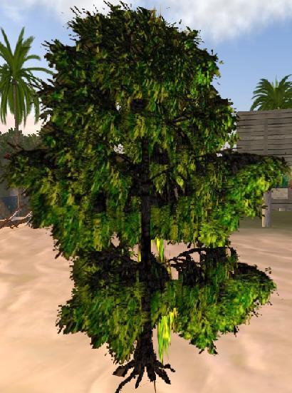 A copy/transfer no-modify Willow tree