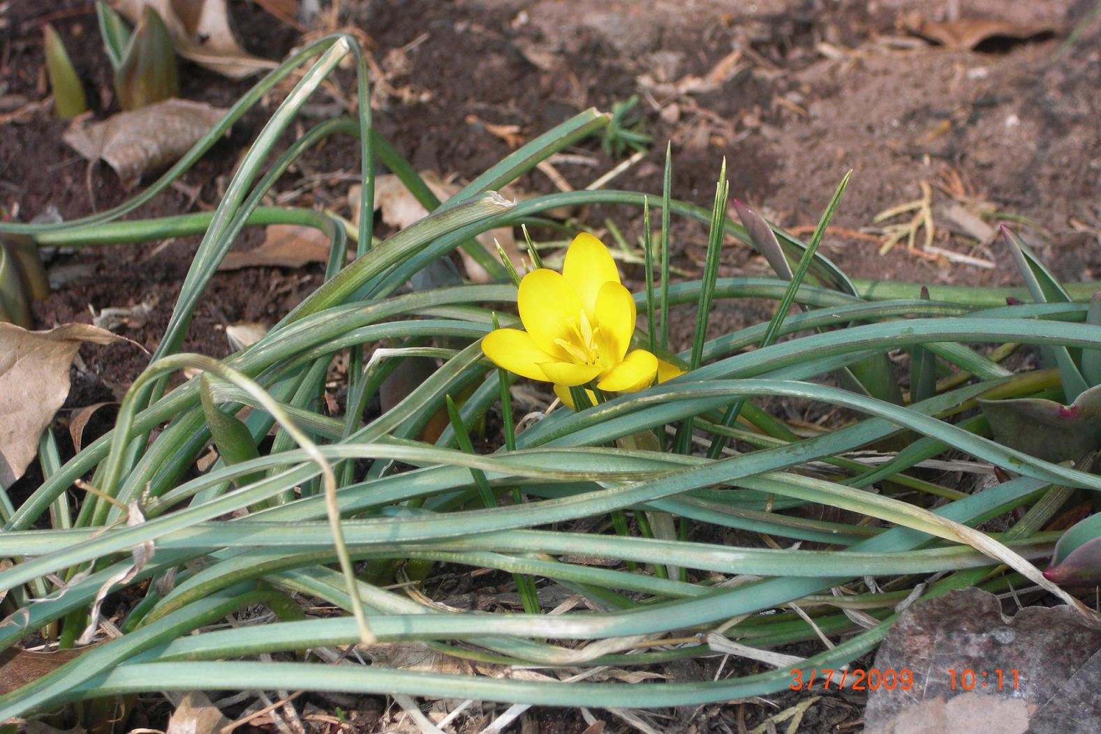 first-sign-of-spring