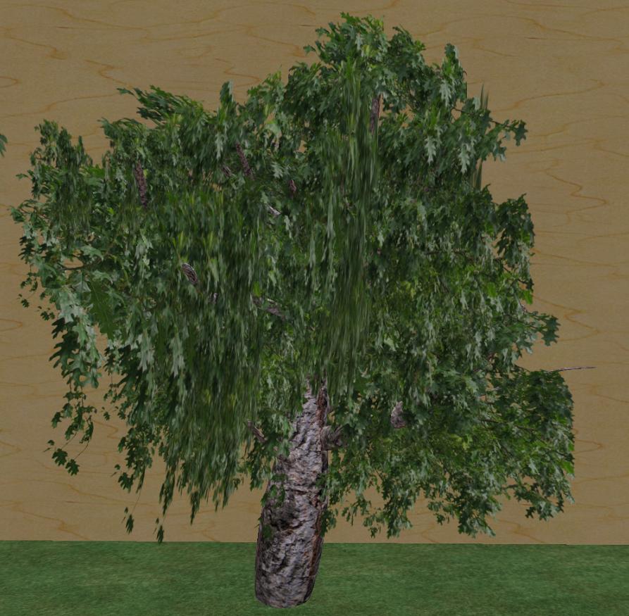 my 3rd tree - the oak