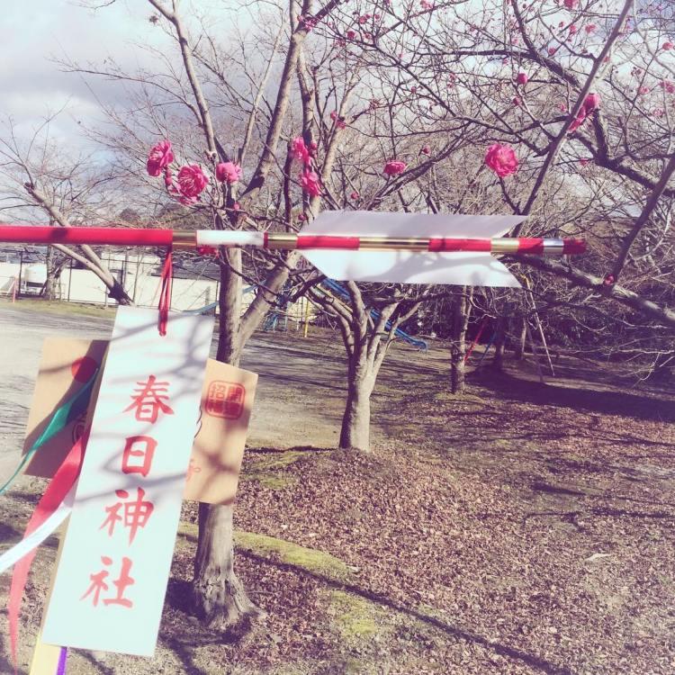 春日神社に行ってきました!梅の花、2月のフォトウエディングに綺麗に咲いていて欲しいな〜(希望✨)#和泉市 #フォトウエディング #和装の花嫁 #神社 #春日神社 #破魔矢 #ここからスタート
