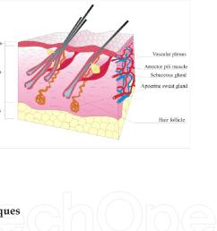 dermatology dog diagram [ 1008 x 828 Pixel ]