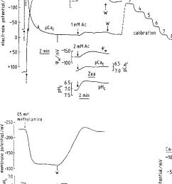 changes in cytoplasmic free ca 2 pcao of riccia [ 736 x 1176 Pixel ]