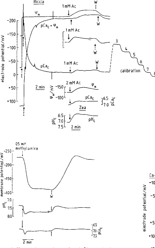 small resolution of changes in cytoplasmic free ca 2 pcao of riccia