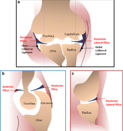 3 diagrams show plicae around the elbow joint a diagram of the elbow [ 1018 x 1100 Pixel ]