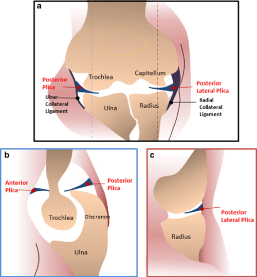 small resolution of 3 diagrams show plicae around the elbow joint a diagram of the elbow