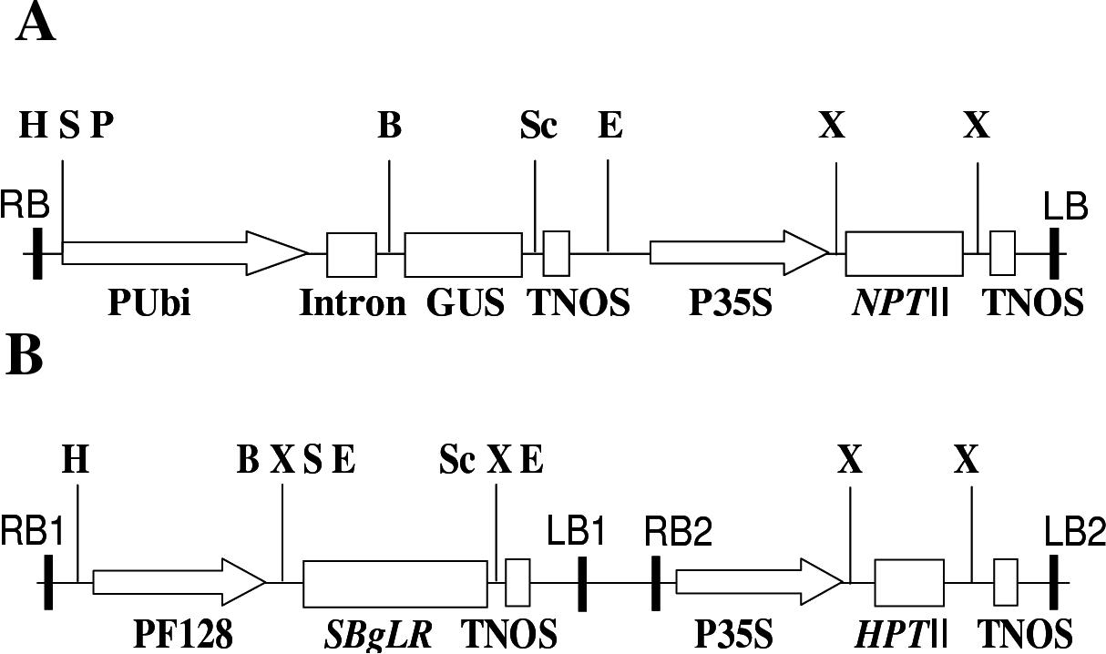 hight resolution of schematic diagrams of the binary vectors used in this study not drawn