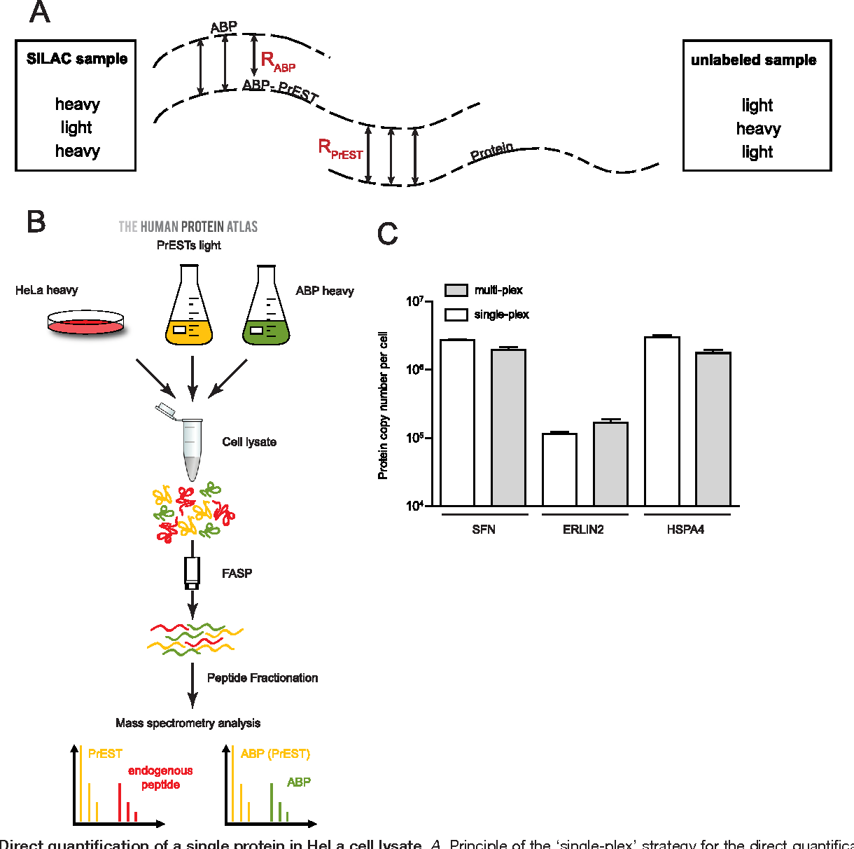 Figure 7 from A Protein Epitope Signature Tag (PrEST