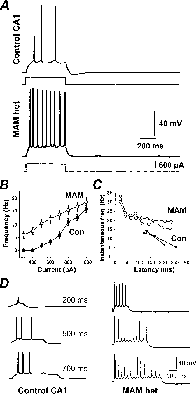 Figure 8 from Hippocampal heterotopia lack functional Kv4