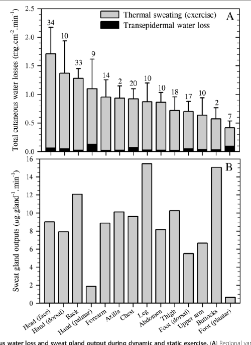 small resolution of figure 5 total cutaneous water loss and sweat gland output during dynamic and static exercise