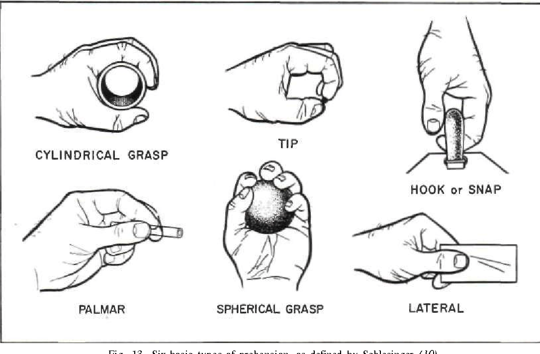 Figure 13 from The anatomy and mechanics of the human hand