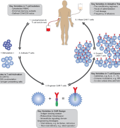 key variables in car t cell therapy the diagram depicts the processes  [ 968 x 878 Pixel ]