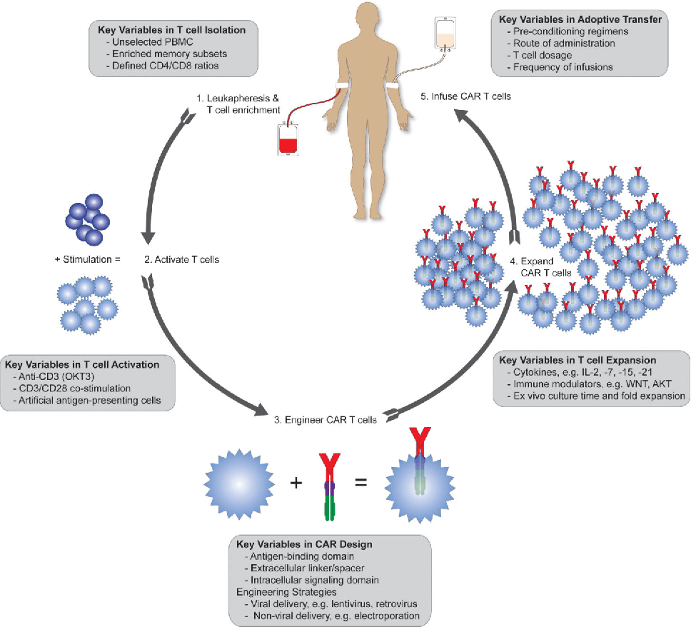 hight resolution of key variables in car t cell therapy the diagram depicts the processes