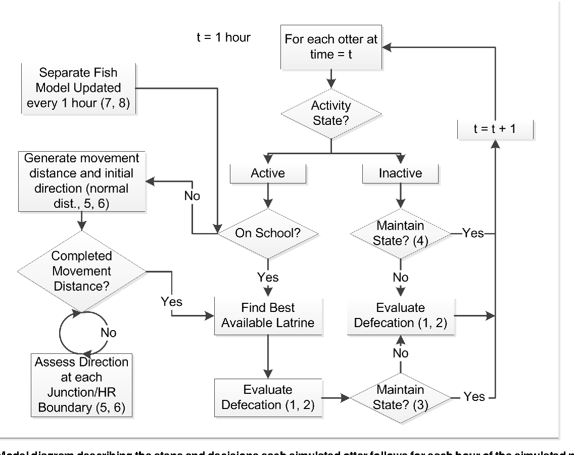 hight resolution of model diagram describing the steps and decisions each simulated otter follows for each