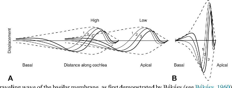 Figure 1.2 from Auditory pathways: anatomy and physiology