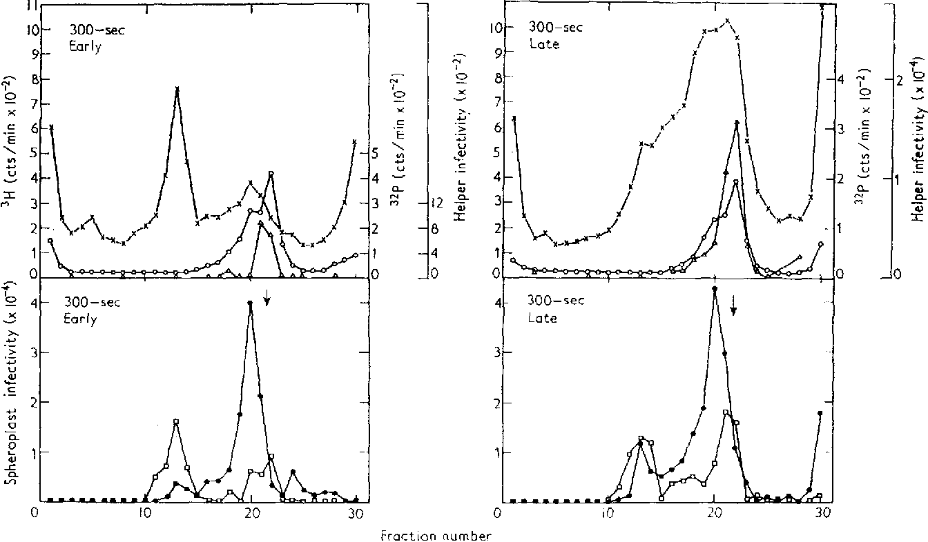 hight resolution of sedimentation and biological properties of the dna extracted from 300 second