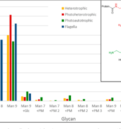figure 5 n glycans found on euglena glyco protein extracts and on [ 1248 x 658 Pixel ]