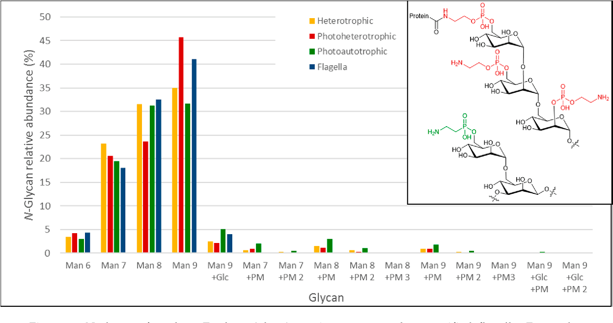 hight resolution of figure 5 n glycans found on euglena glyco protein extracts and on