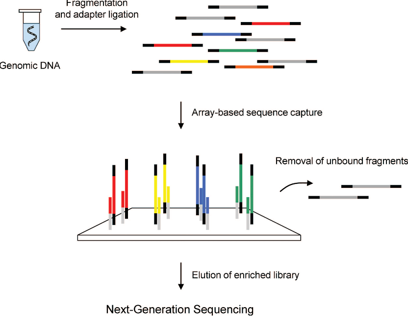 Figure 1 from Targeted next-generation sequencing for the