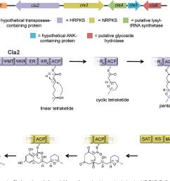 cladosporin gene cluster in cladosporium cladosporioides and putative biosynthesis by the hr pks [ 1162 x 808 Pixel ]