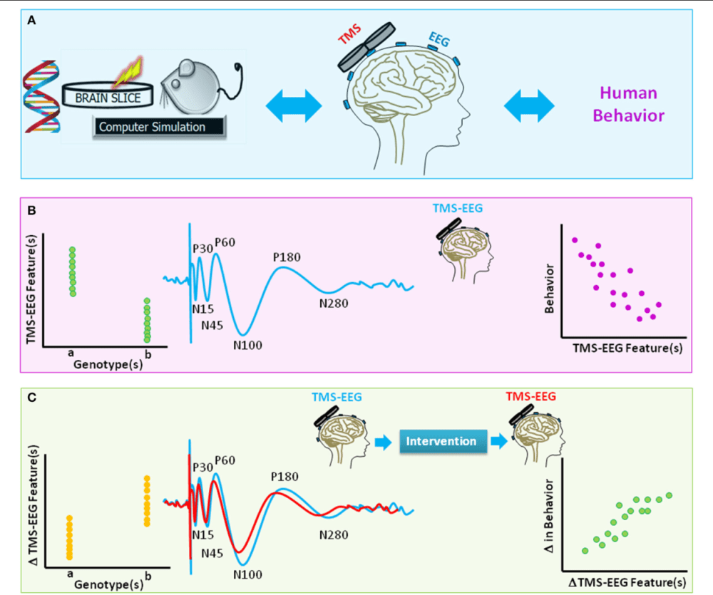medium resolution of figure 4 a schematic diagram of translational value of tms eeg a